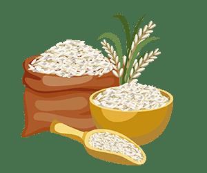 برنج پر محصول ندا