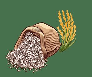 برنج پر محصول فجر