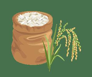 برنج پر محصول عنبربو