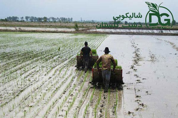 شخم زدن زمین برنج